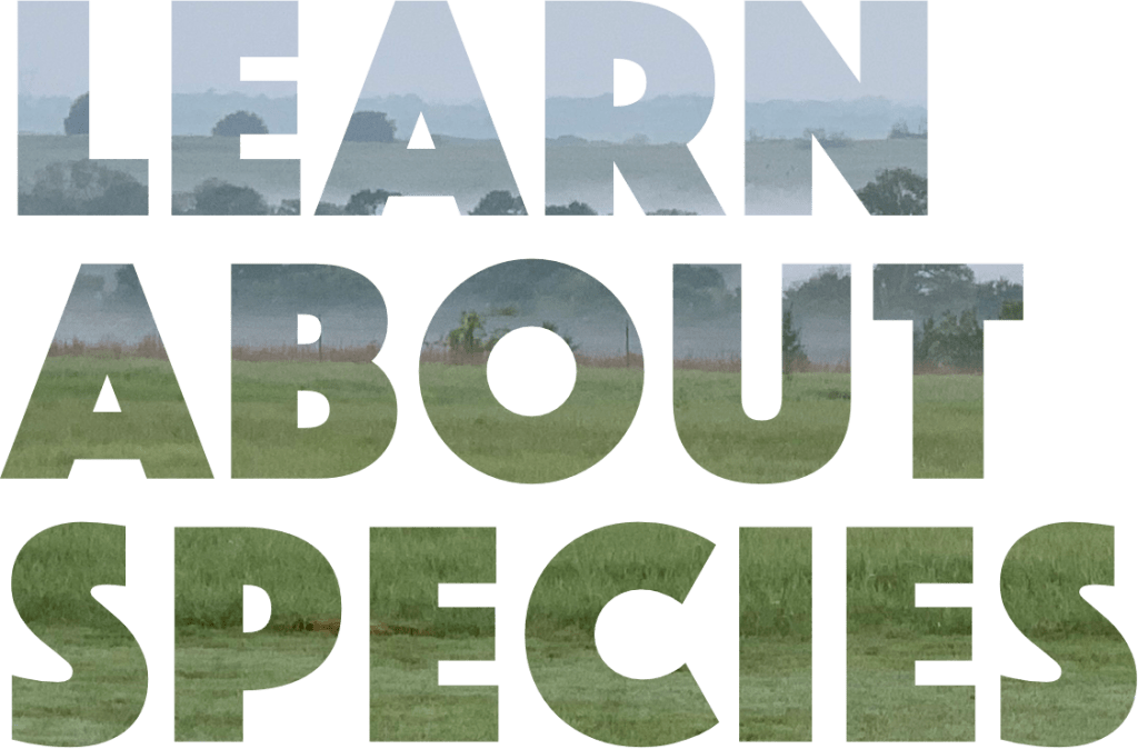 Learn About Species